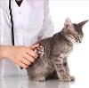 Ветеринарные клиники в Брянске